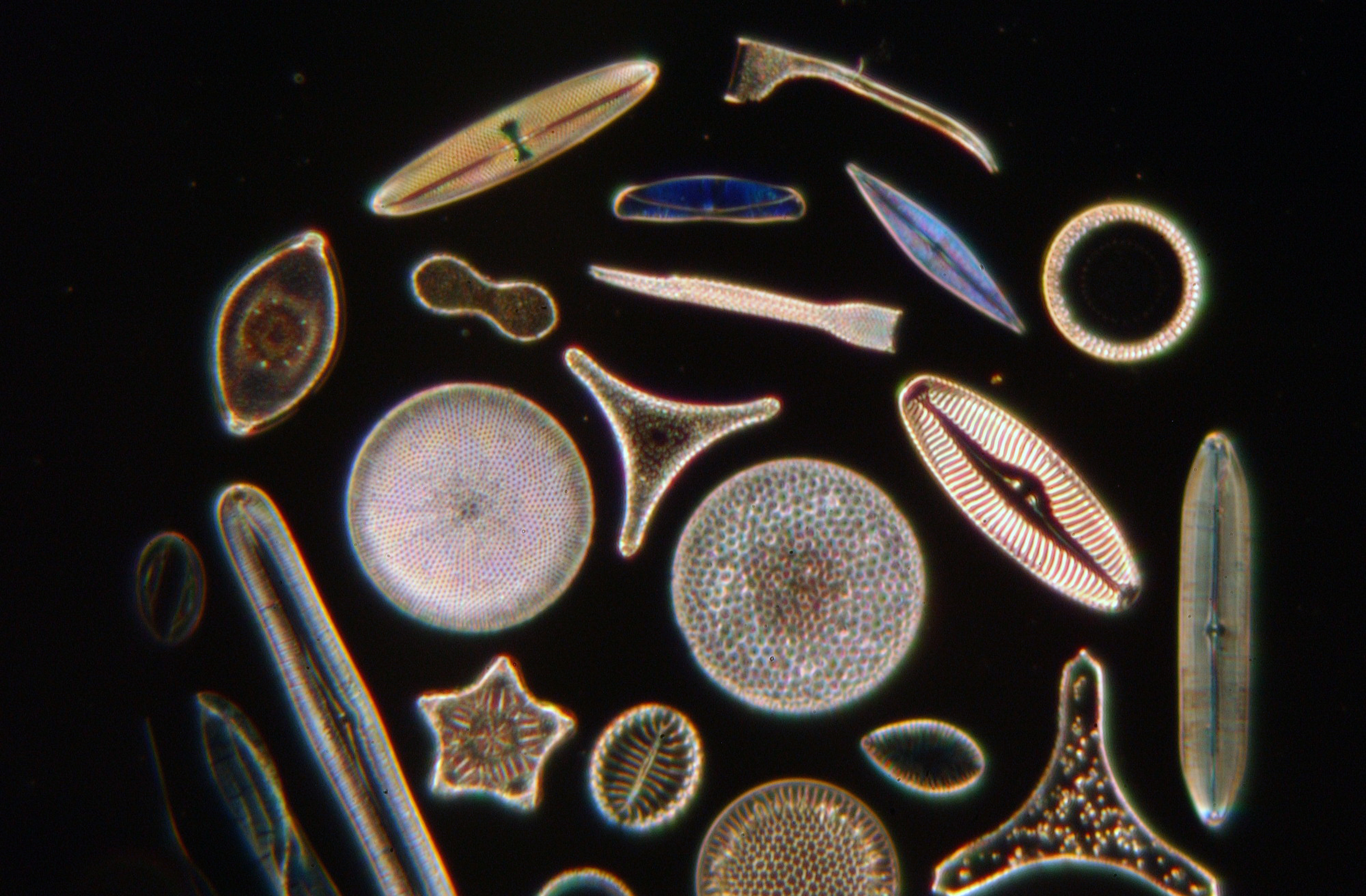 an overview of the phytoplanton Summary: phytoplankton play a vital role in the marine ecosystem changes in diversity and abundance can affect the entire food chain, including humans students will.